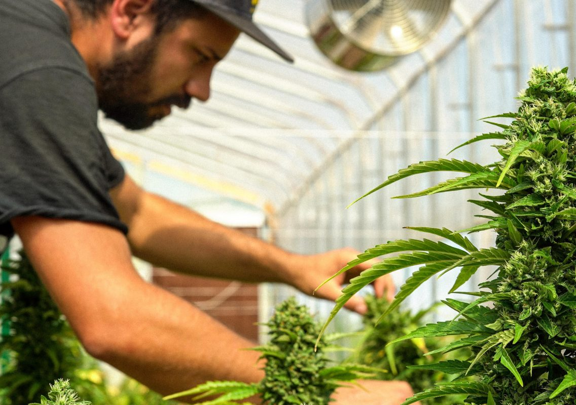 growers-department-greenhouse