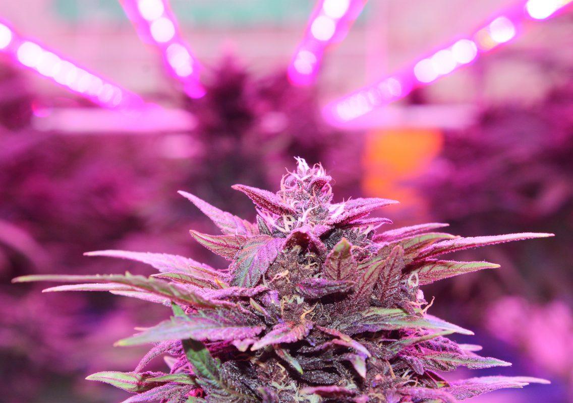 growers-department-indoor