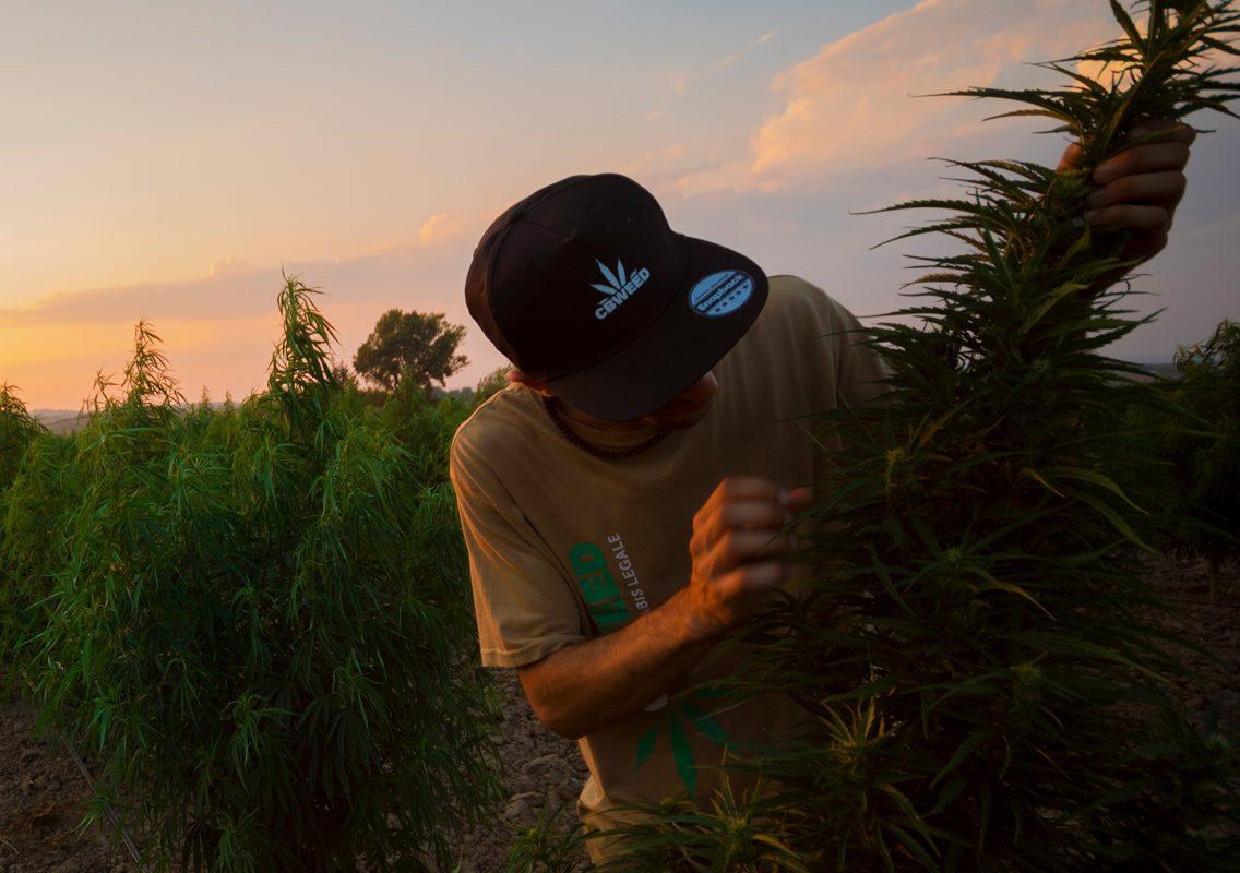growers-department-outdoor
