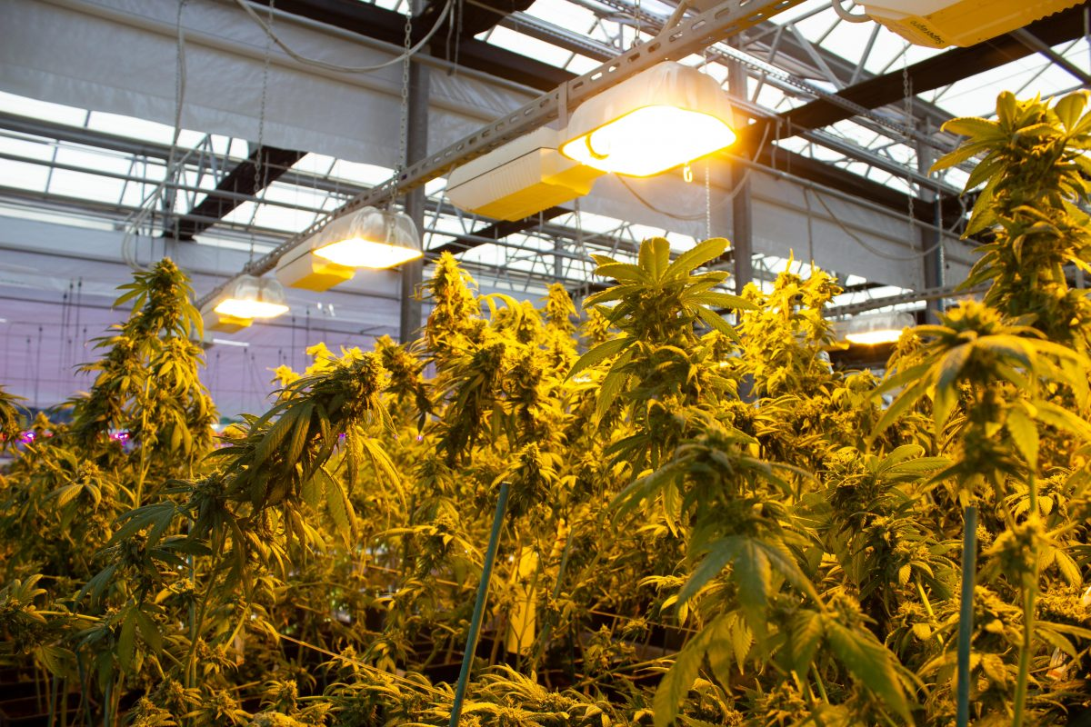 growers-department-2